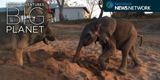 Video dneva: Čudovita zgodba o nenavadnem prijateljstvu
