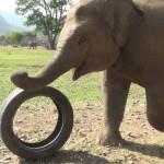 Video dneva: Vsi, ki imate radi živali, ob tem videu ne boste ostali ravnodušni!