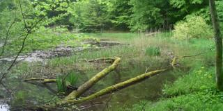 V gozdnem parku Jankovac