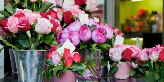 sveže rože zmanjšujejo bolečino