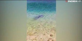 morski pes v šibeniku