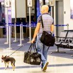 stranišče za hišne ljubljenčke na letališču